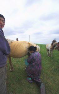 nomad milking mare